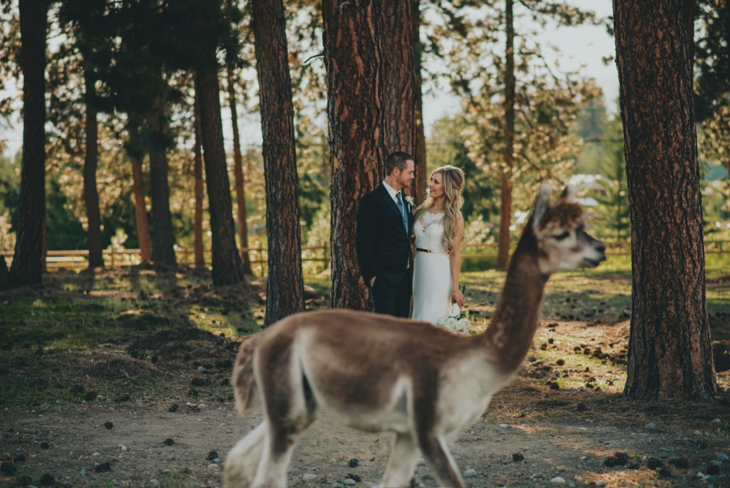 Llama wedding photo