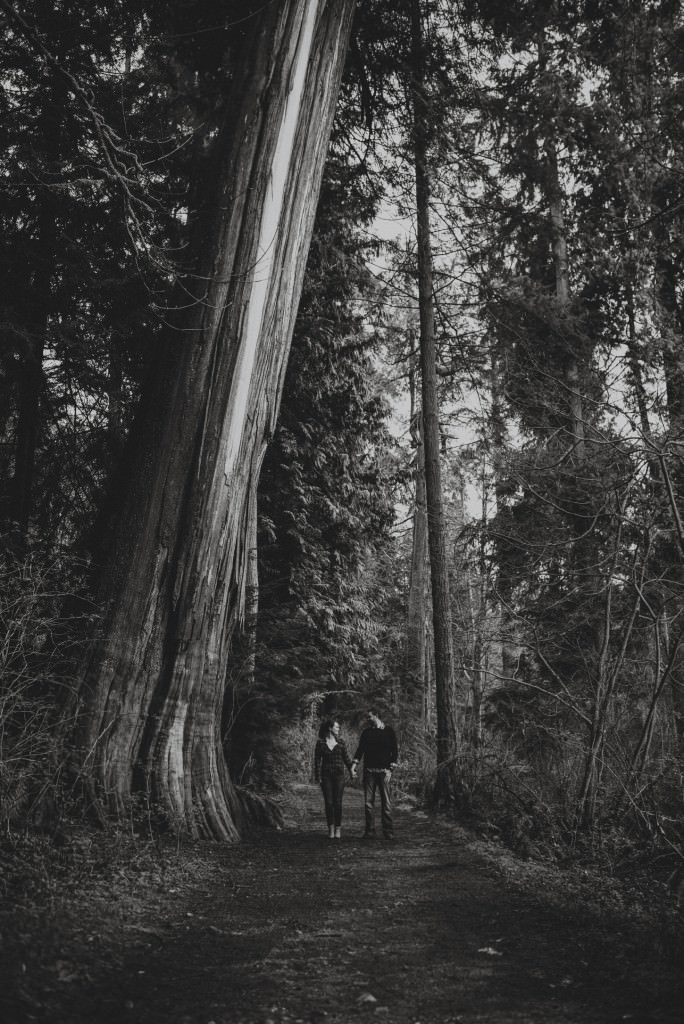 Giant BC tree in Engagement Session