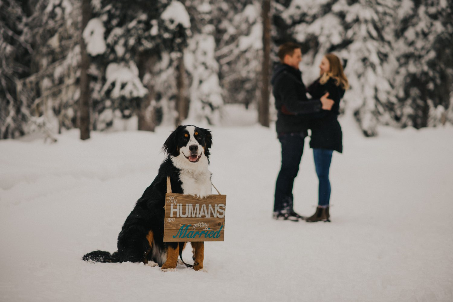 Snowy Forest Engagement - Kelowna Photographer_0006