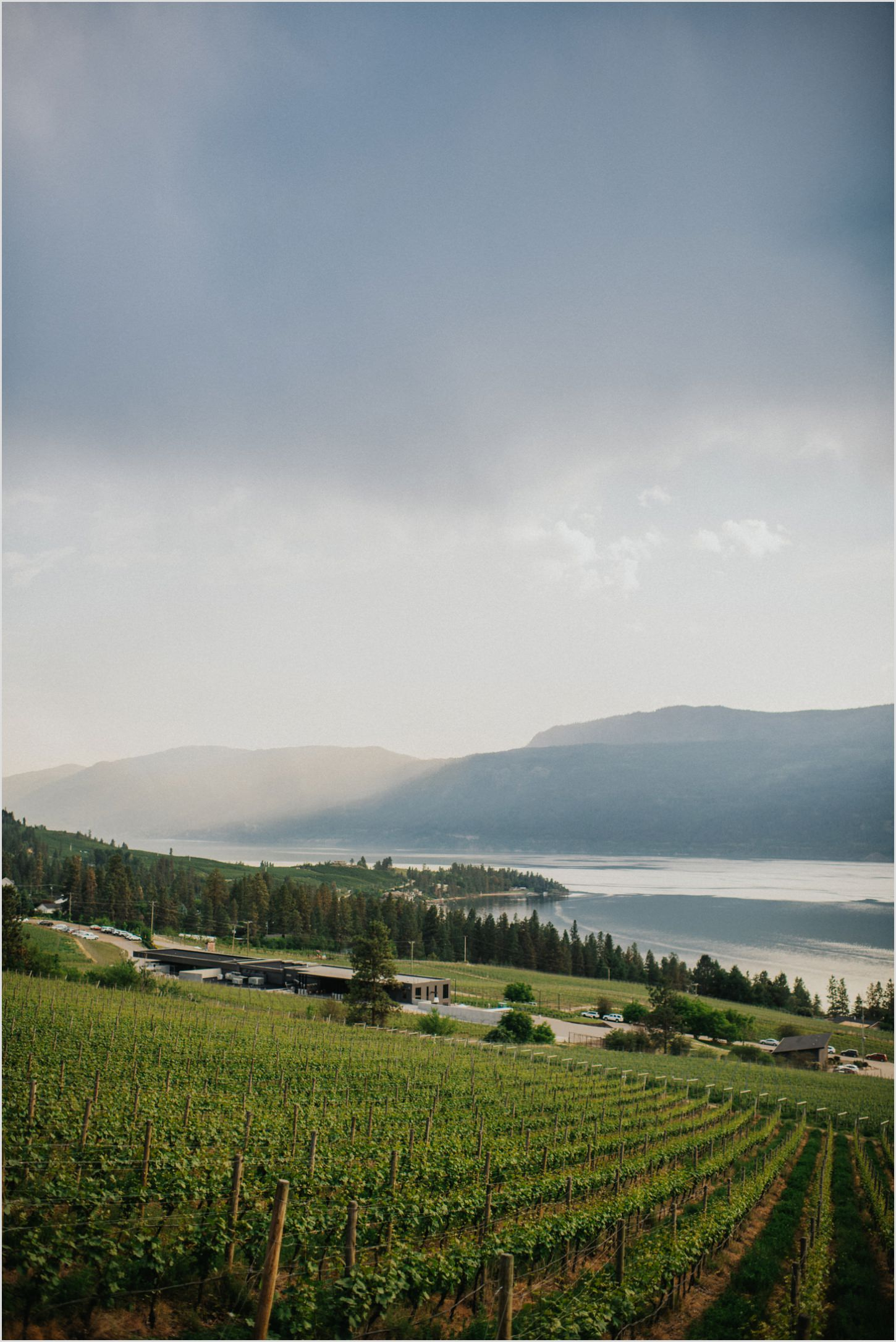 Kelowna Photographer 50th Parallel Winery